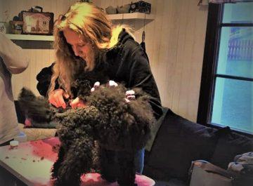 Att vara dogsitter – Fanny berättar featured image